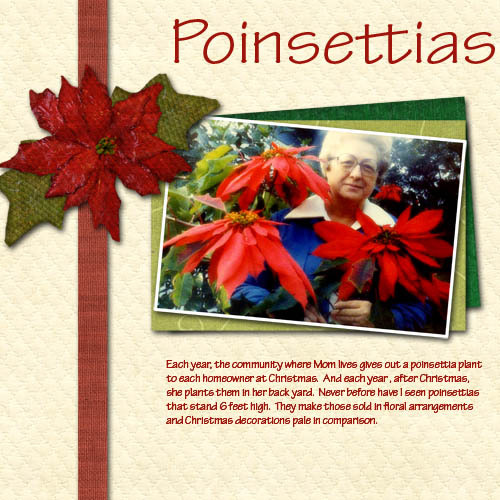 Poinsettias_copy