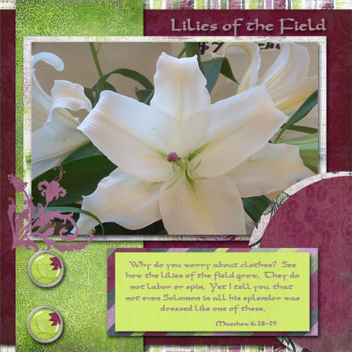 Lilies_of_the_field