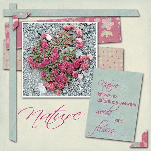 Nature_copy
